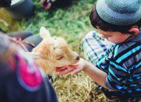Family Farm Camp