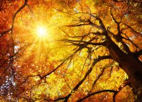 Tu B'Shvat Seder – New Year for the Trees